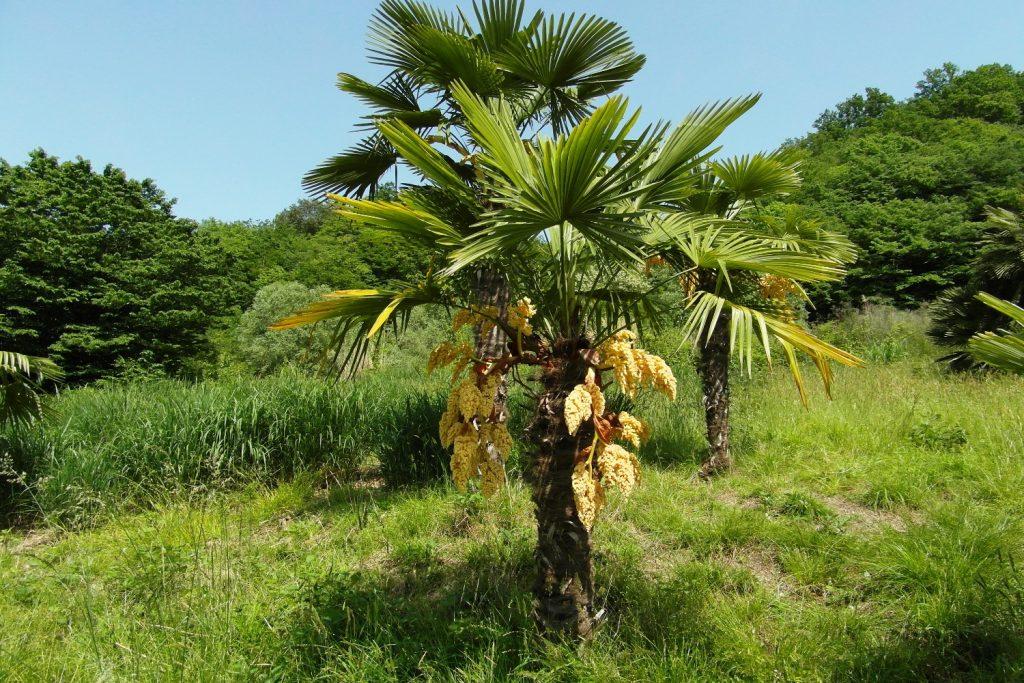 И пальмы!