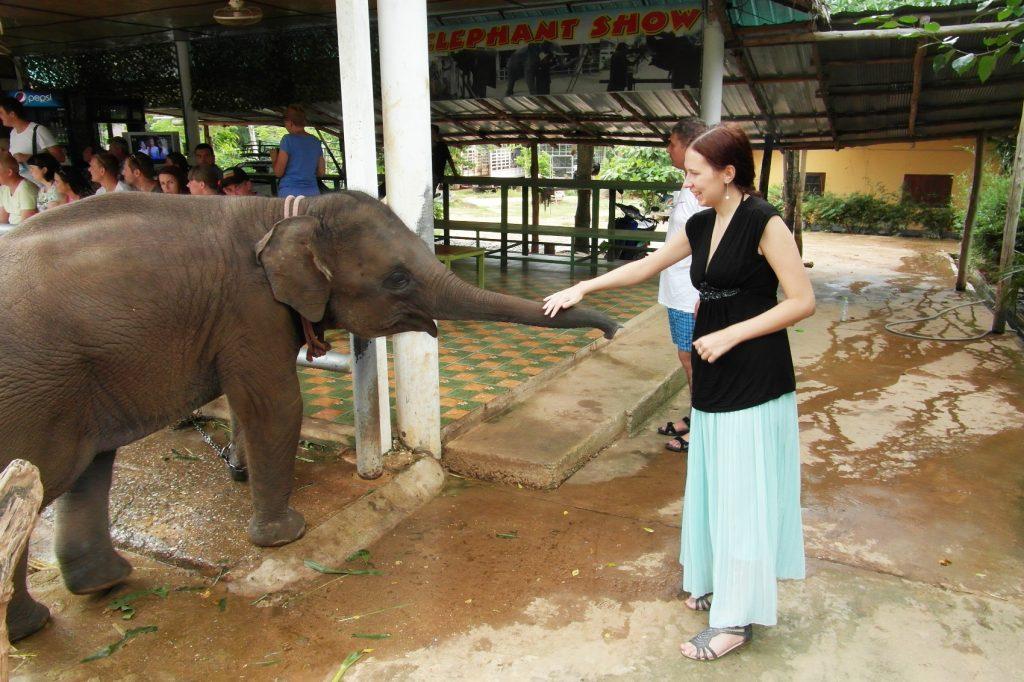 После шоу слонов была возможность их погладить