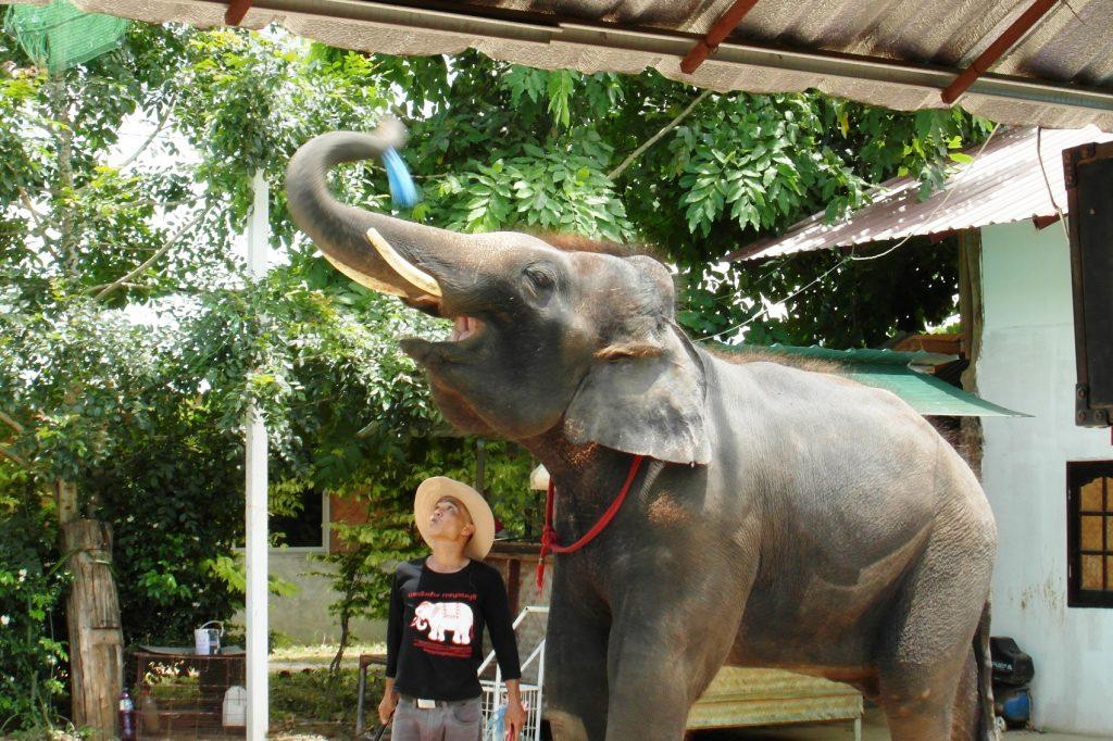 Харизматичный слонишка