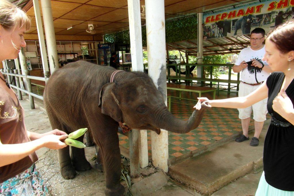 Покормить чудесного слоника