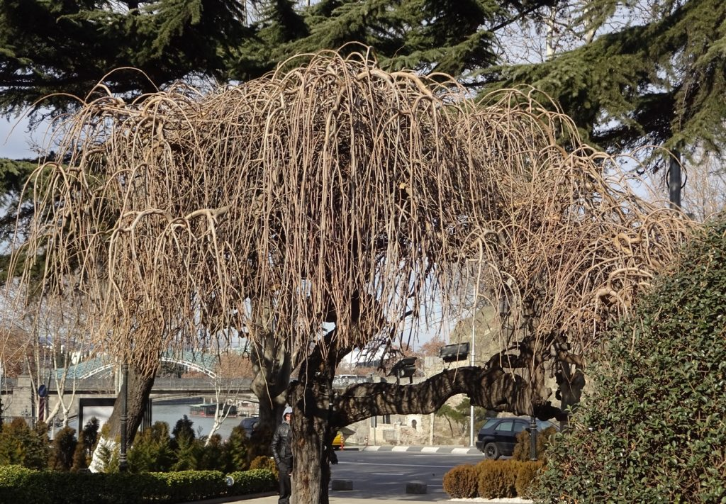 Шикарное дерево