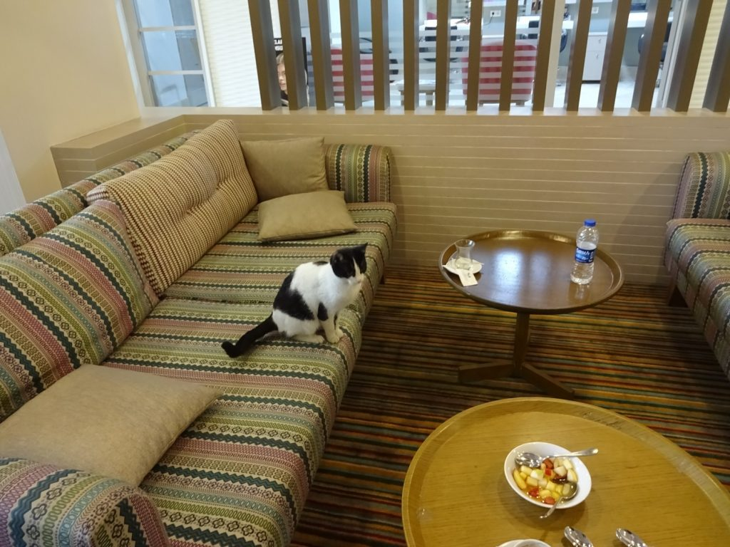 Котик в гости пришел
