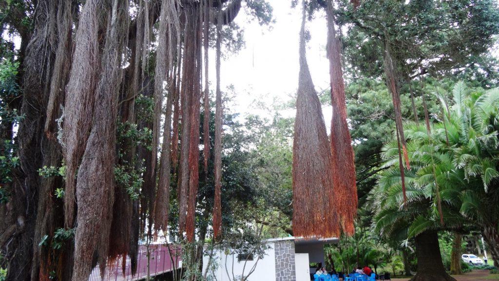Какие-то очень необычные штуки свисают с дерева