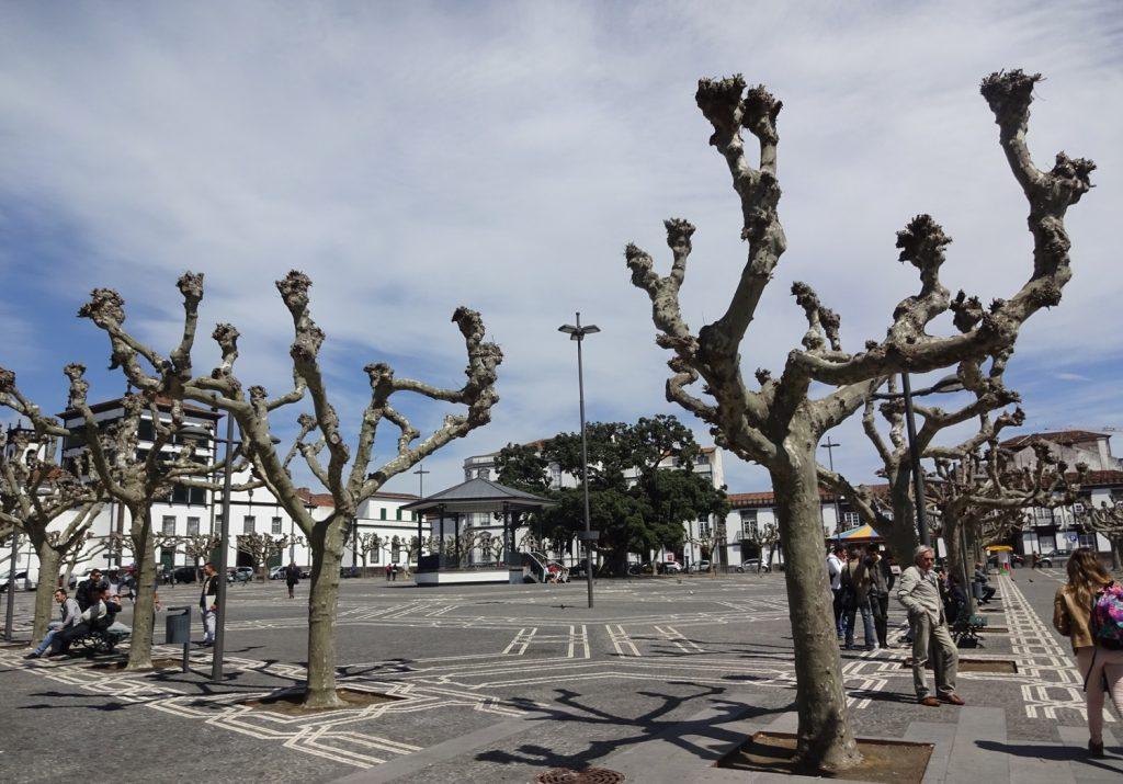 Деревья выглядят необычно... Но площадь классная