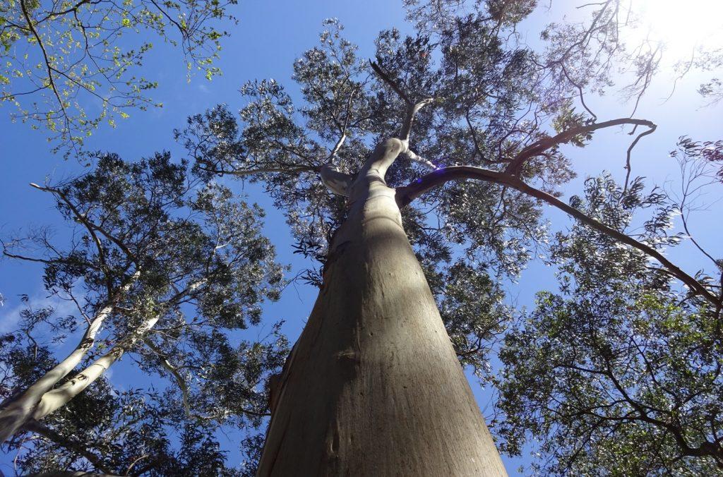 Фото не про ветки на фоне неба. Посмотрите на кору дерева - оно здорово, просто такое необычное