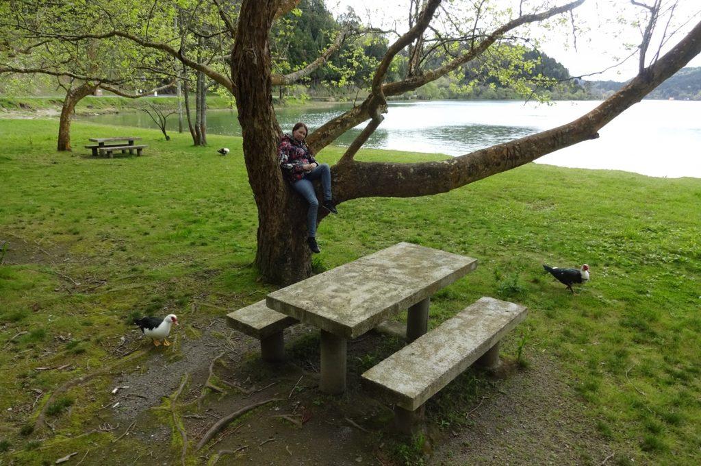 Отдыхаю на дереве. Типа прячусь от страшных птиц внизу, но на самом деле они не страшные. И умеют летать все равно