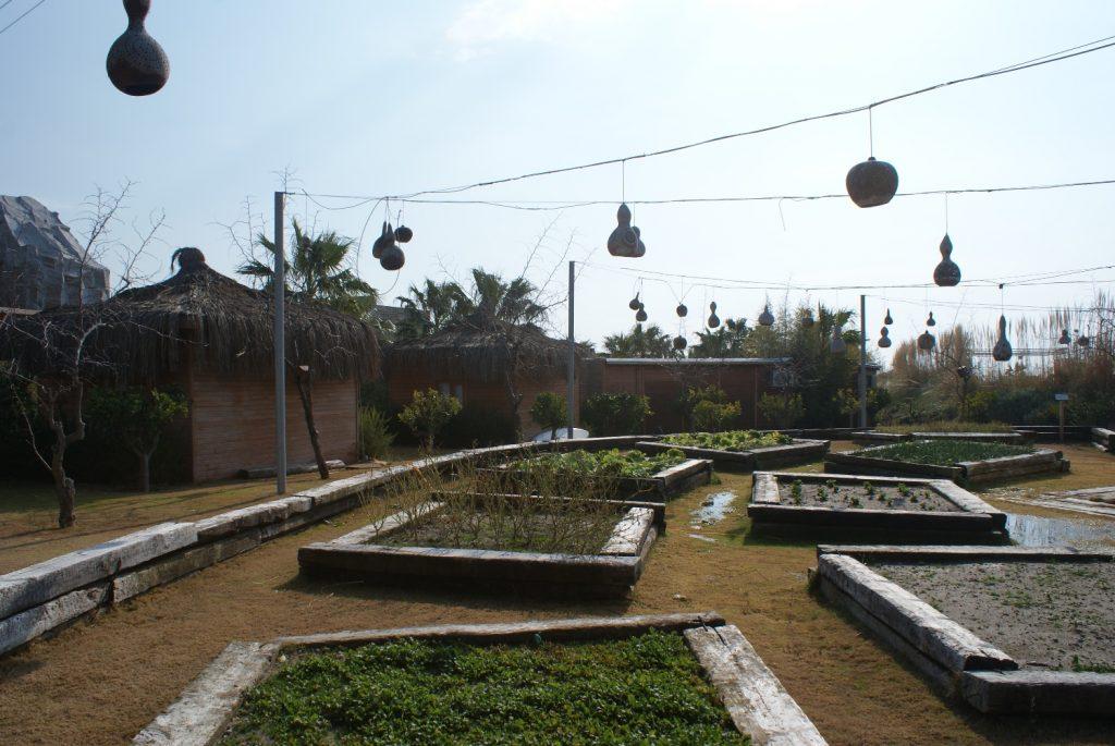 Сад. Туристы могут что-нибудь выращивать