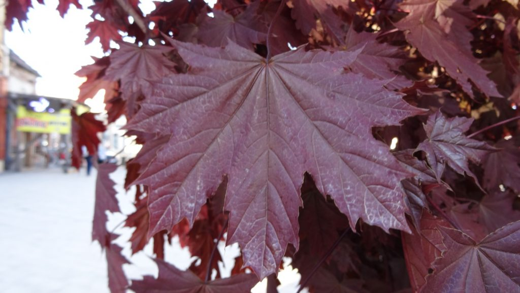 Листья почти правильного цвета