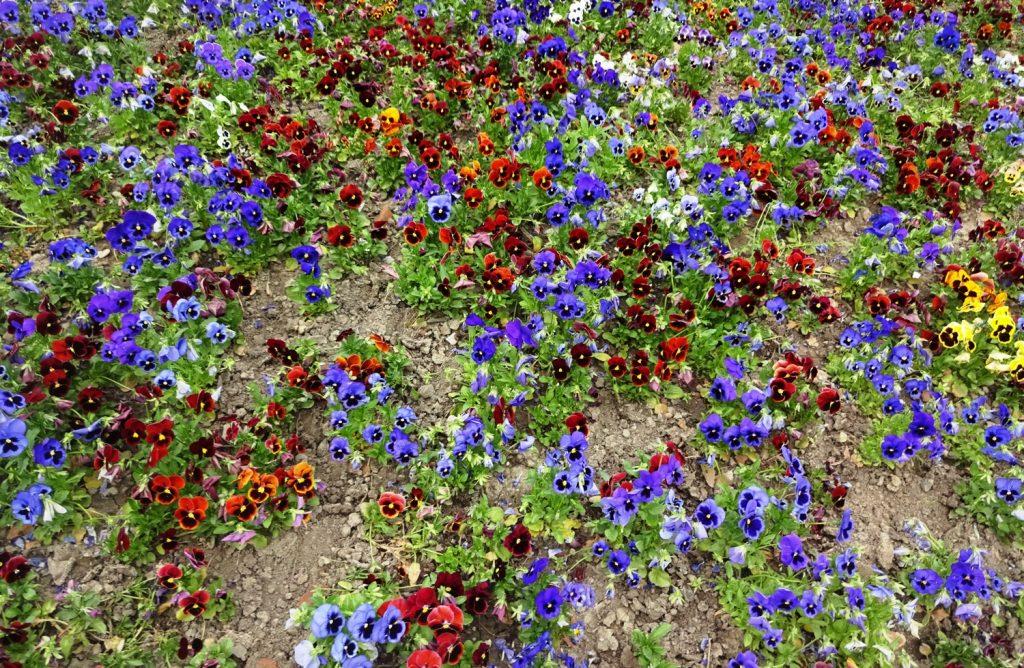 Весна уже вовсю!