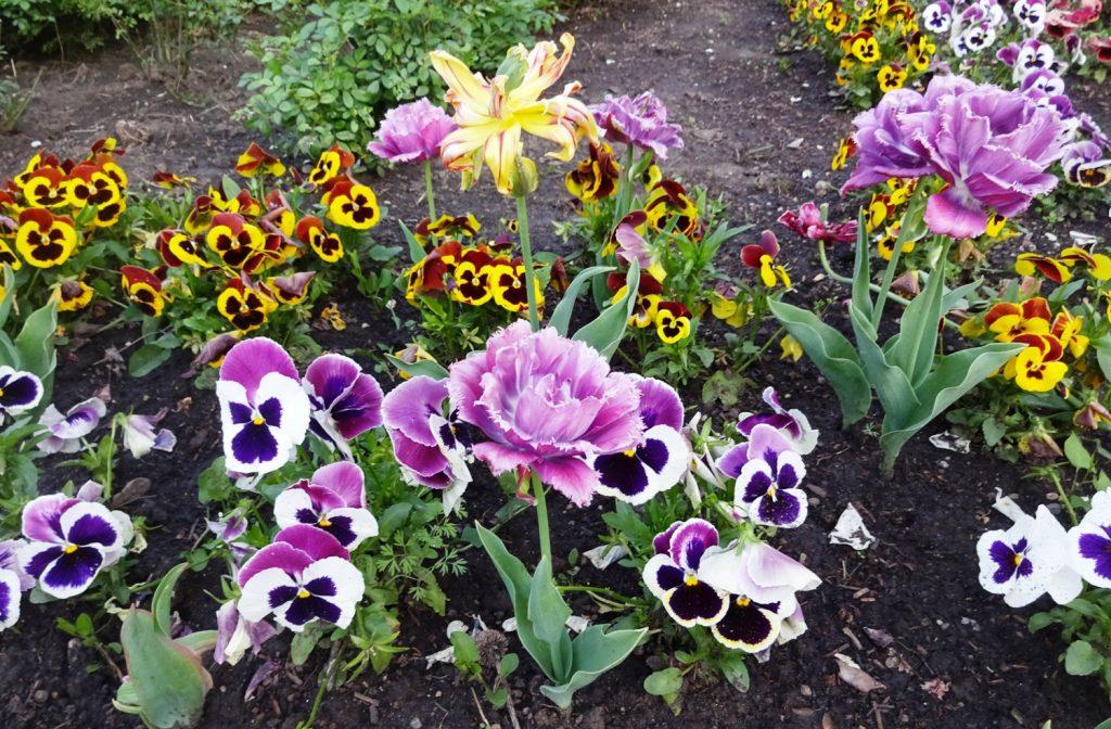 Весна полным ходом