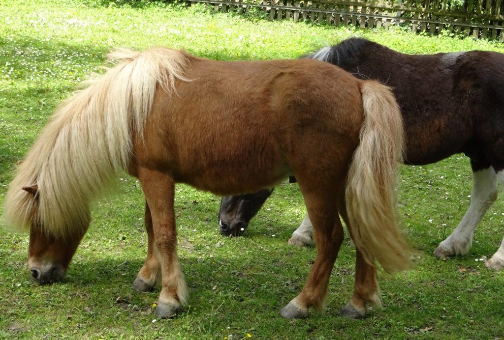 Какие классные пони! Это же пони?