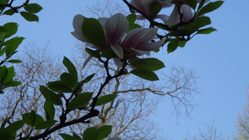 Очень красивые цветы, здесь не видно (я гений фотосъемки), но они огромные