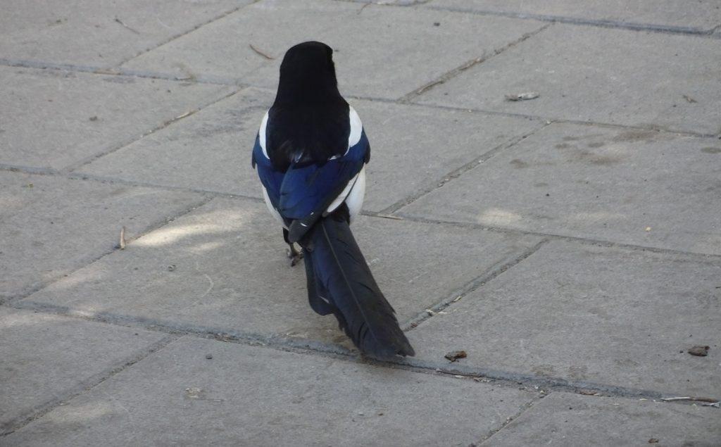 Люблю красивых птичек
