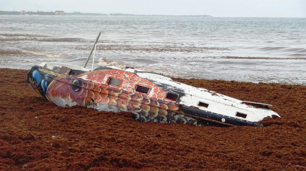 Катер, который затонул не в воде, а в водорослях на берегу