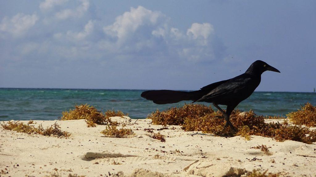 Шикарная птица