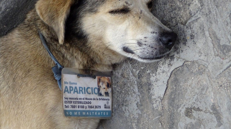 Собачка не бездомная!