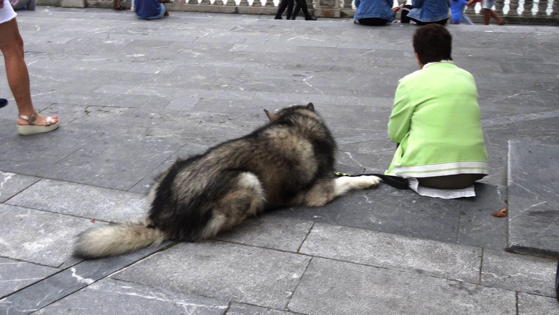 В городе очень много собак