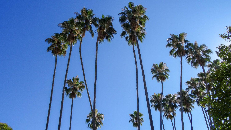 Мои любимые деревья - пальмы