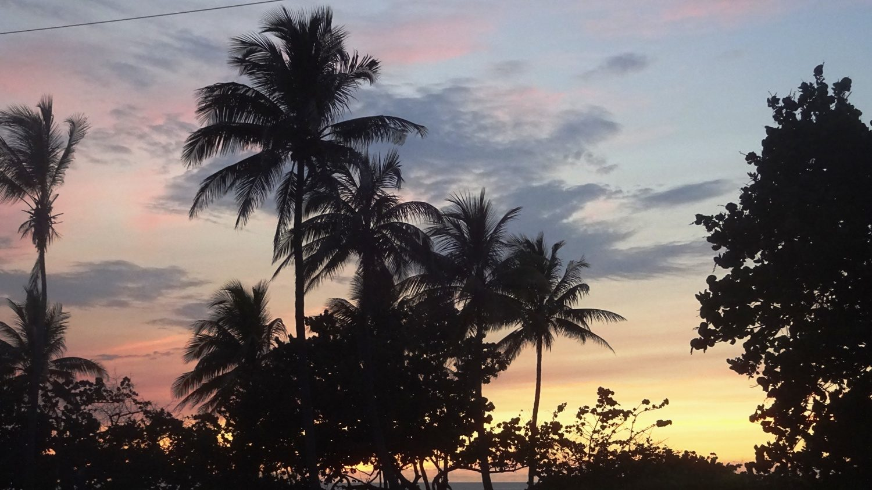 Люблю пальмы на фоне заката