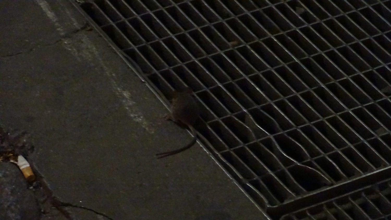 Совершенно случайно нашла мышонка!