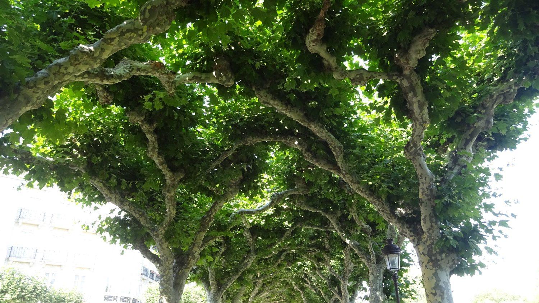 """Когда клены сплетаются ветками, образуя """"потолок"""" над дорожкой..."""