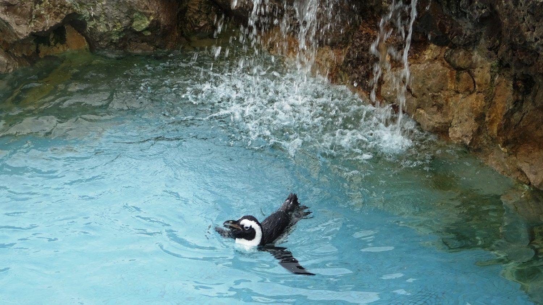Прелестный пингвин!