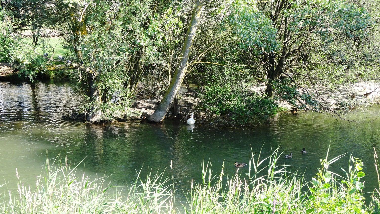 Берега реки Арлансон