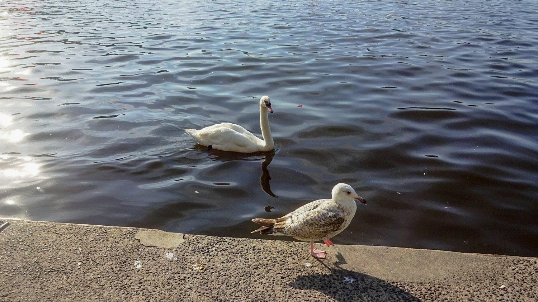Всегда фотографирую птиц у воды