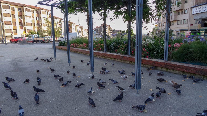 Неожиданно наткнулись на площадь со множеством голубей