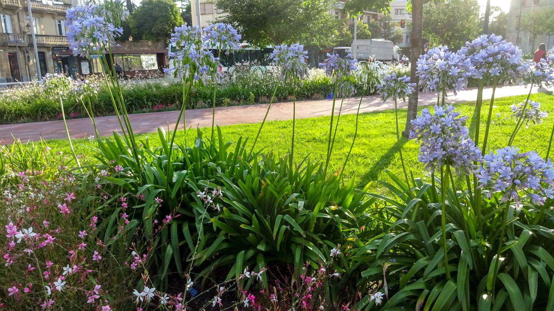 Много цветов и газонов