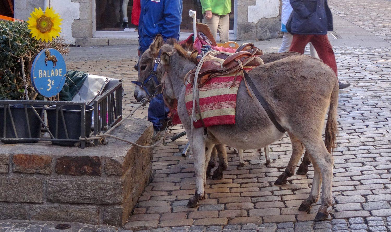 За 3 евро дети катаются на ослике