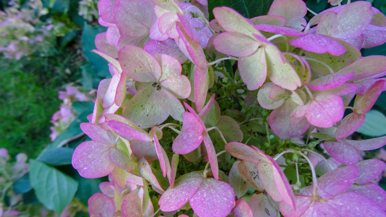 Классные цветы