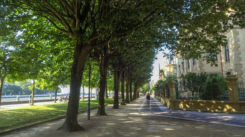 Деревья такие густые, что даже в безоблачный день вся улица в тени. Она идет вдоль реки