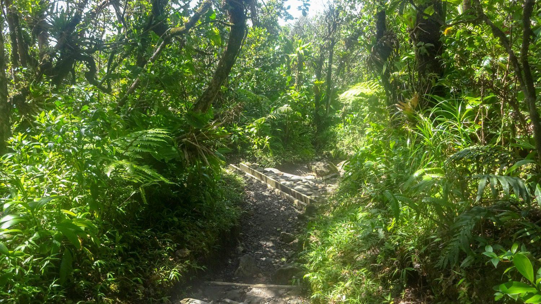 Растительность потрясающая. Яркая, буйная... Тропики!