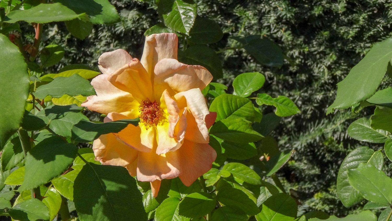 Тихо, спокойно, и растут вот такие цветы