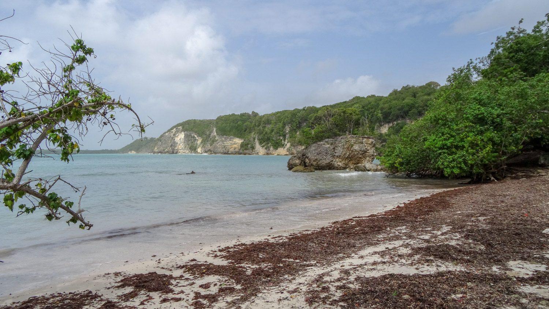 И снова видим их! Да, водоросли здесь не по всему пляжу, но купаться и в 100 метрах от них как-то не хочется