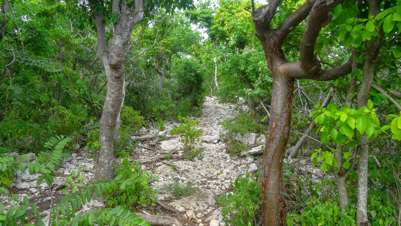 Прогулка проходит по дорожкам среди густой растительности