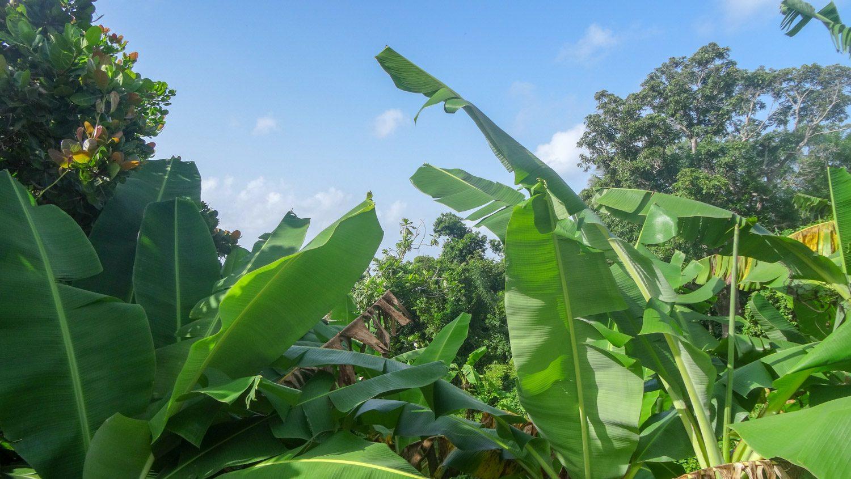 Несмотря на буйную растительность почти нет неприятных насекомых