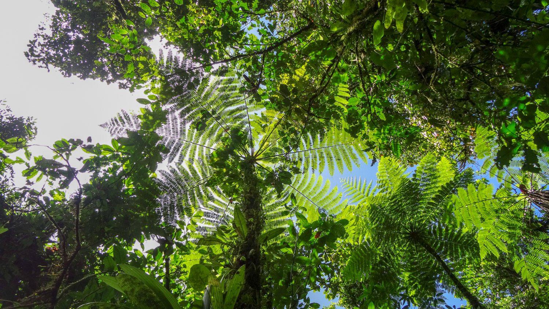 Очень понравилась природа в таком формате. И очень много необычных растений по пути заметили