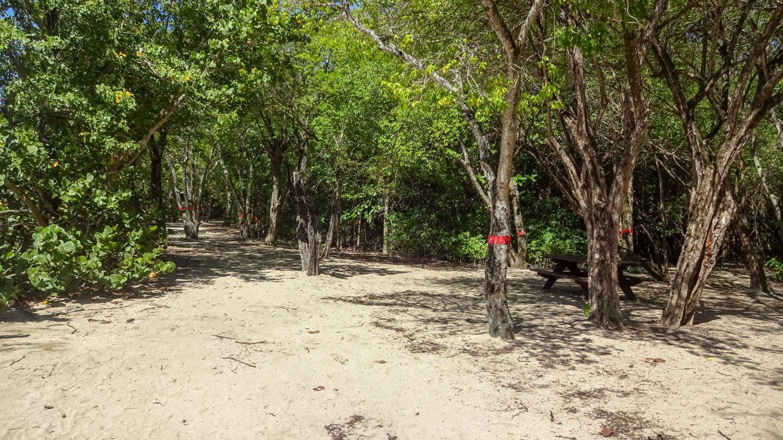 Как и в Гваделупе, здесь можно укрыться в тени деревьев