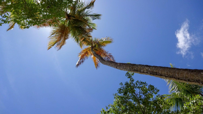 Обожаю пальмы!
