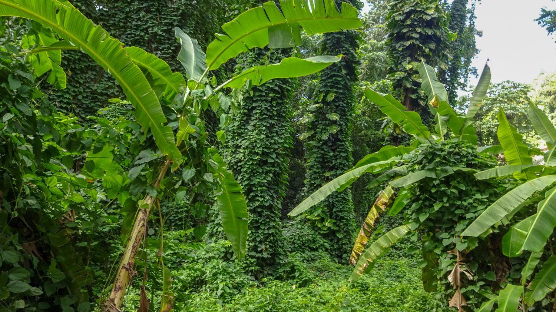 Так примерно выглядят тропики вокруг