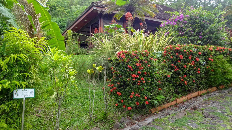 Яркие цветы (наверное, в любое время года)