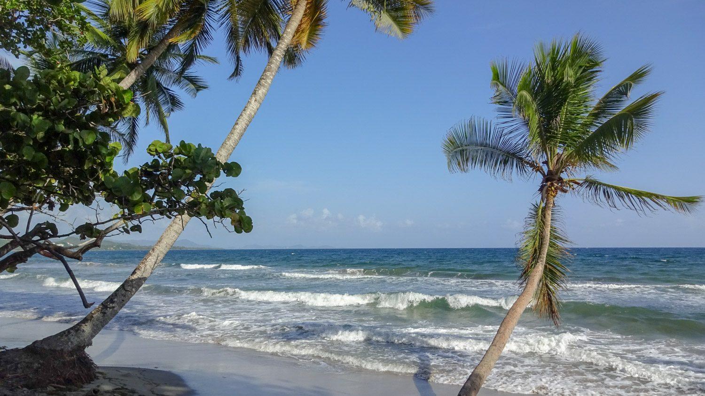 И пальмы очень красивые. Рекомендую!