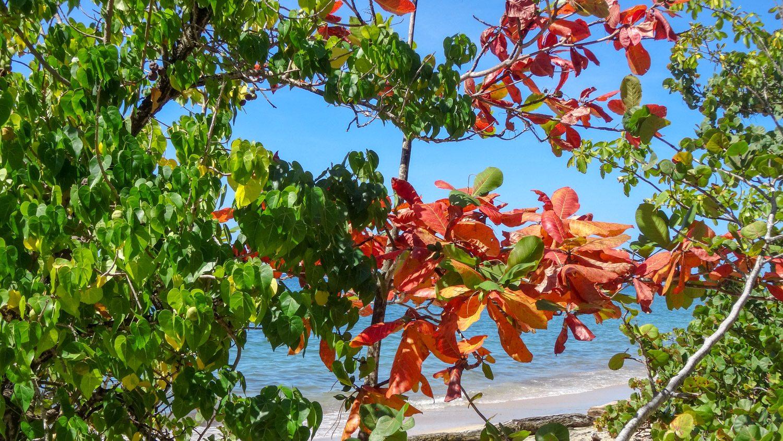 Первое, что бросилось в глаза, - яркие листья!