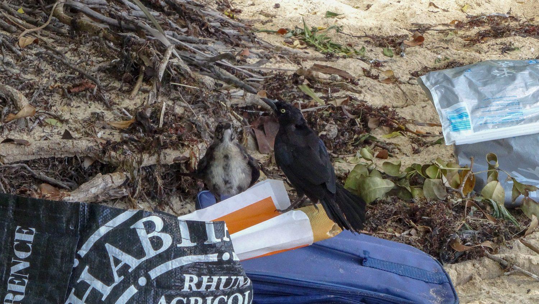 На одном из пляжей местные отдыхающие не спрятали надежно еду... Птички устроили серьезную битву за багет, хотя он длинный - на всех хватило бы