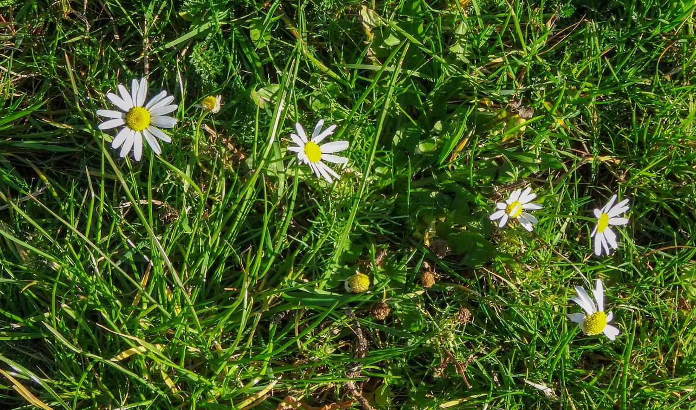 Милые цветочки в траве