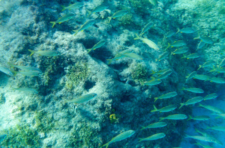 И еще рыбки