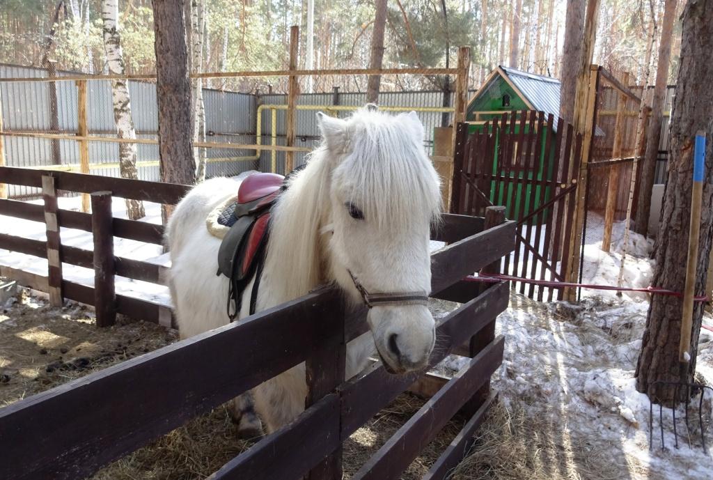 Живут здесь вот такие чудесные лошадки