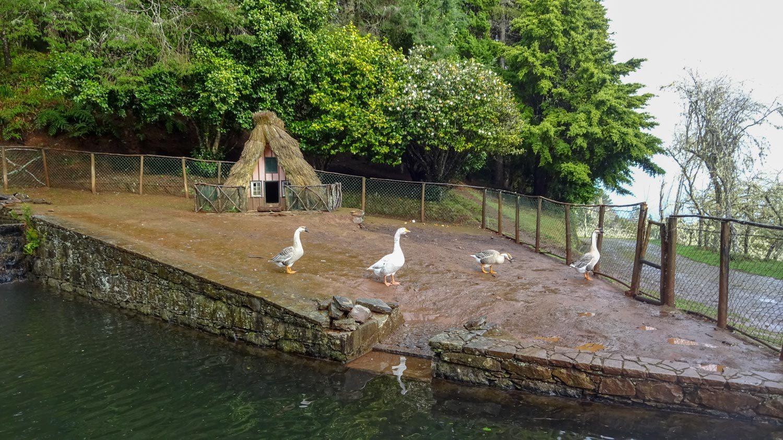 В парке оборудовано специальное место для гусей, и у них тоже свои домики